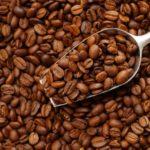 コーヒー豆の品種に詳しくなる 「ゲイシャ種」